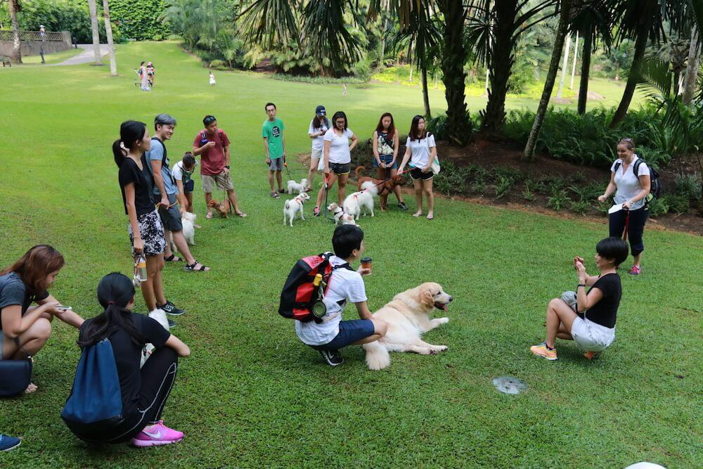 #my10ktoday Fun Walk with Vanillapup Walk Training | Vanillapup