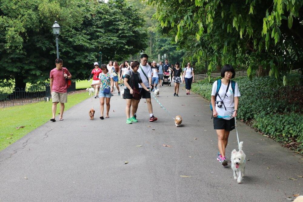 #my10ktoday Fun Walk with Vanillapup | Vanillapup