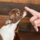 Using Hand Gestures In Dog Training | Vanillapup