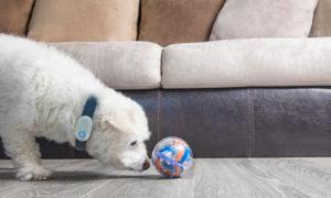 Pebby Pet Robot Sitter | Vanillapup