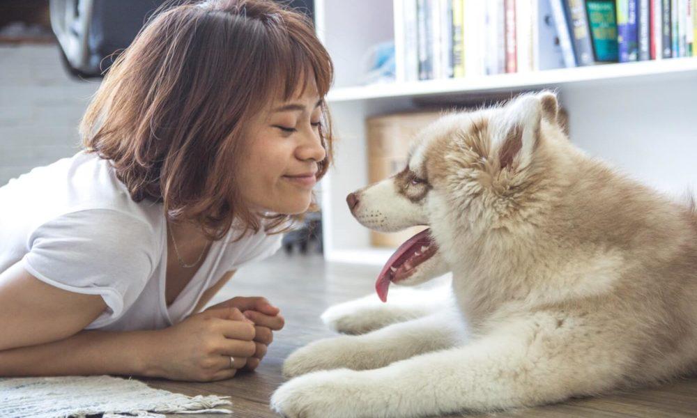 Responsible Pet Ownership | Vanillapup