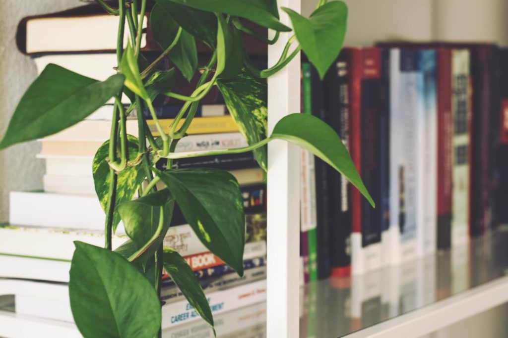 House Plants That Are Safe for Dogs | Vanillapup