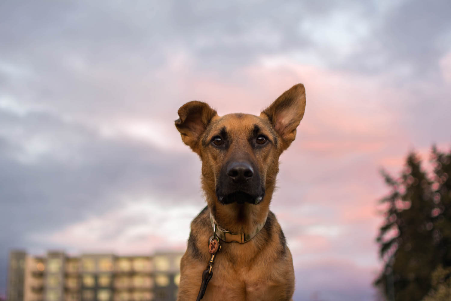 Canine Epilepsy: Tips and Experience From an Epileptic Dog Owner | Vanillapup