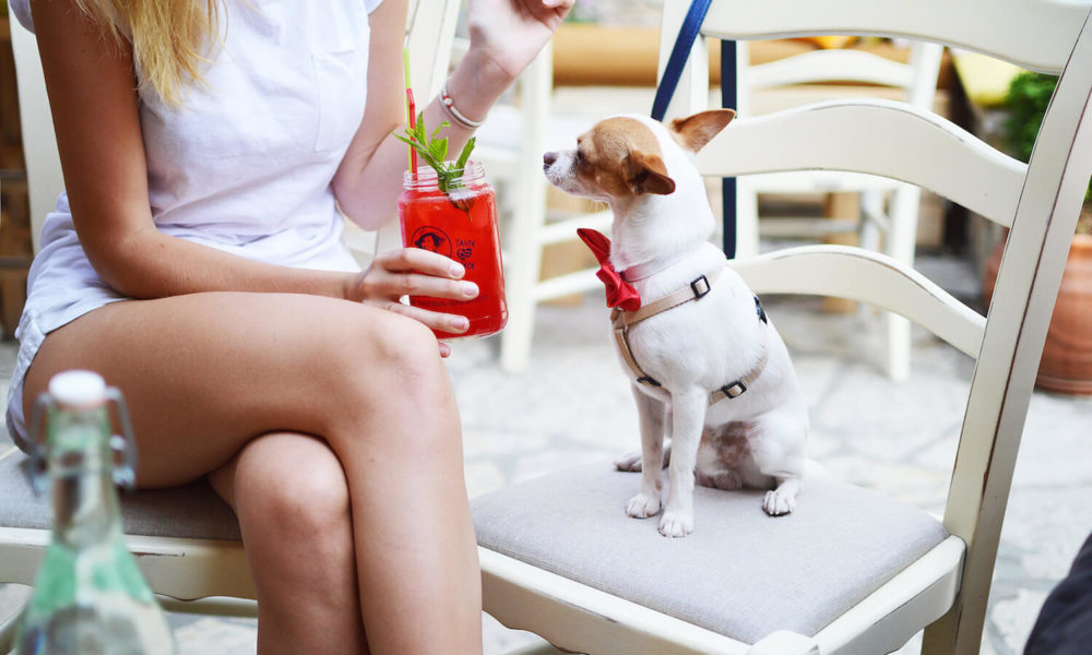 7 Tips for Dining Out With Your Dog | Vanillapup