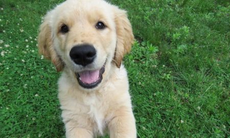 Positive Reinforcement Dog Training Tips | Vanillapup