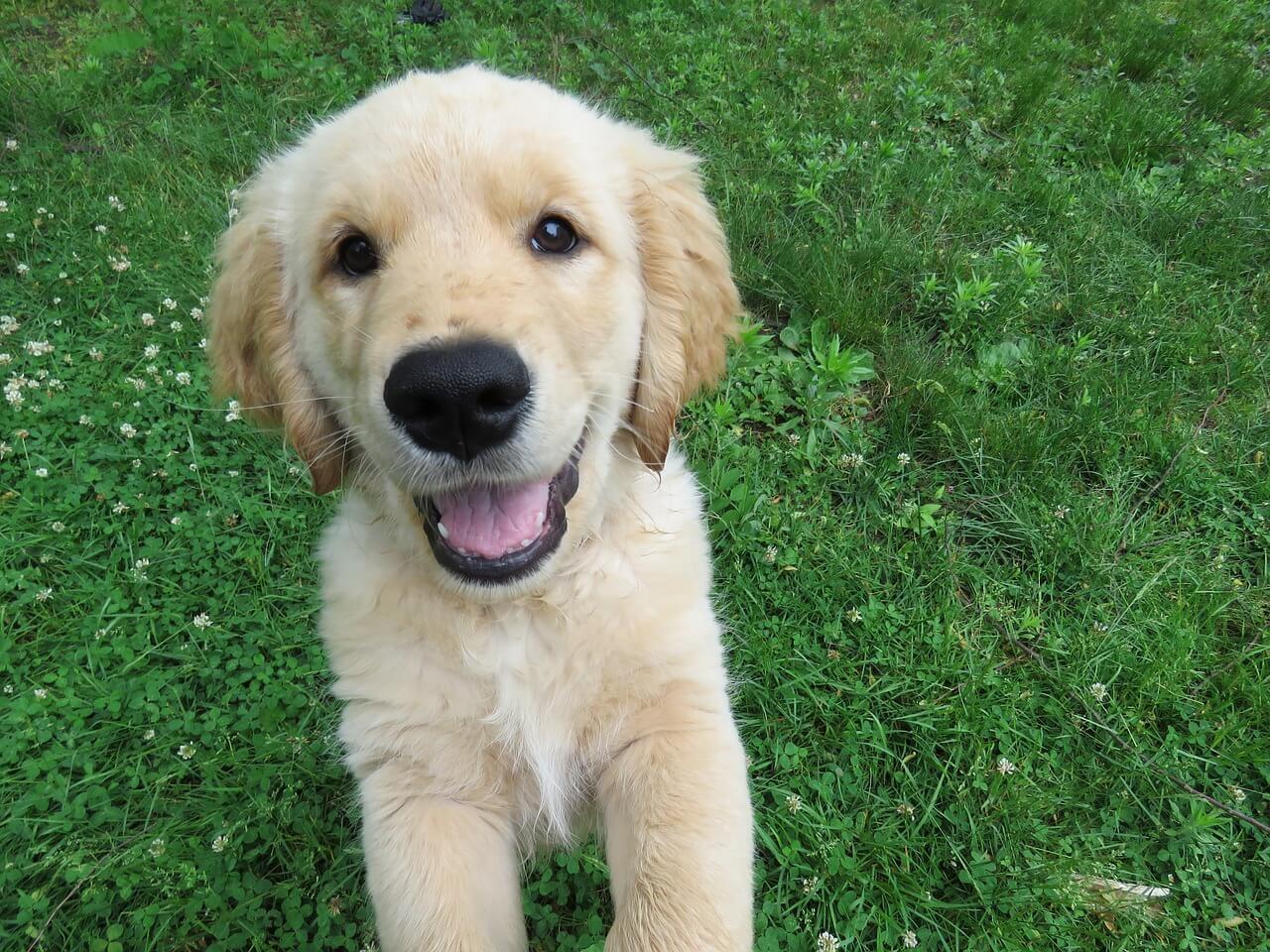 Positive Reinforcement Dog Training Tips | Vanillapup
