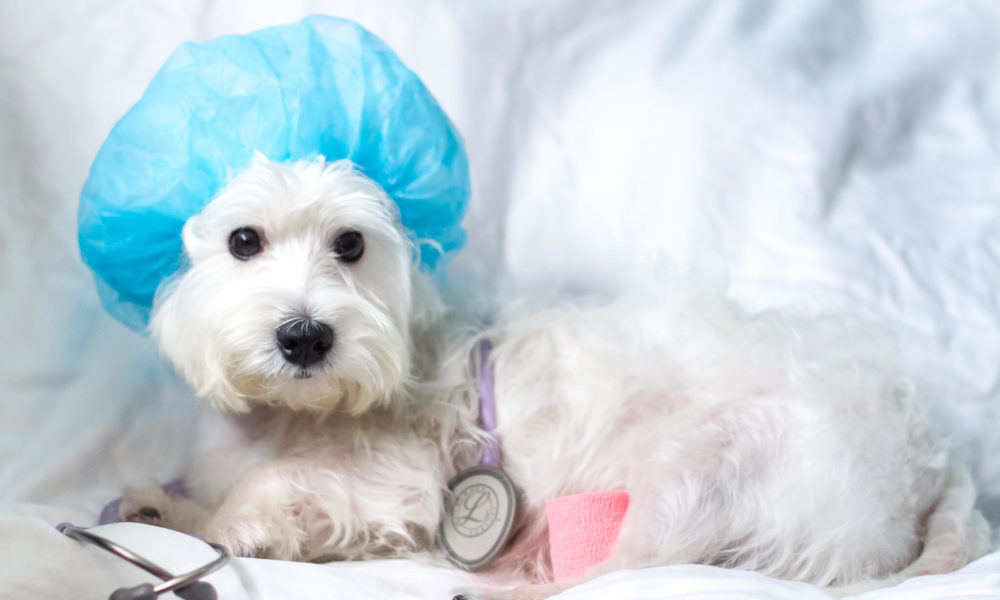 How to Choose Pet Insurance | Vanillapup