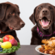 Help Your Dog Lose Weight | Vanillapup