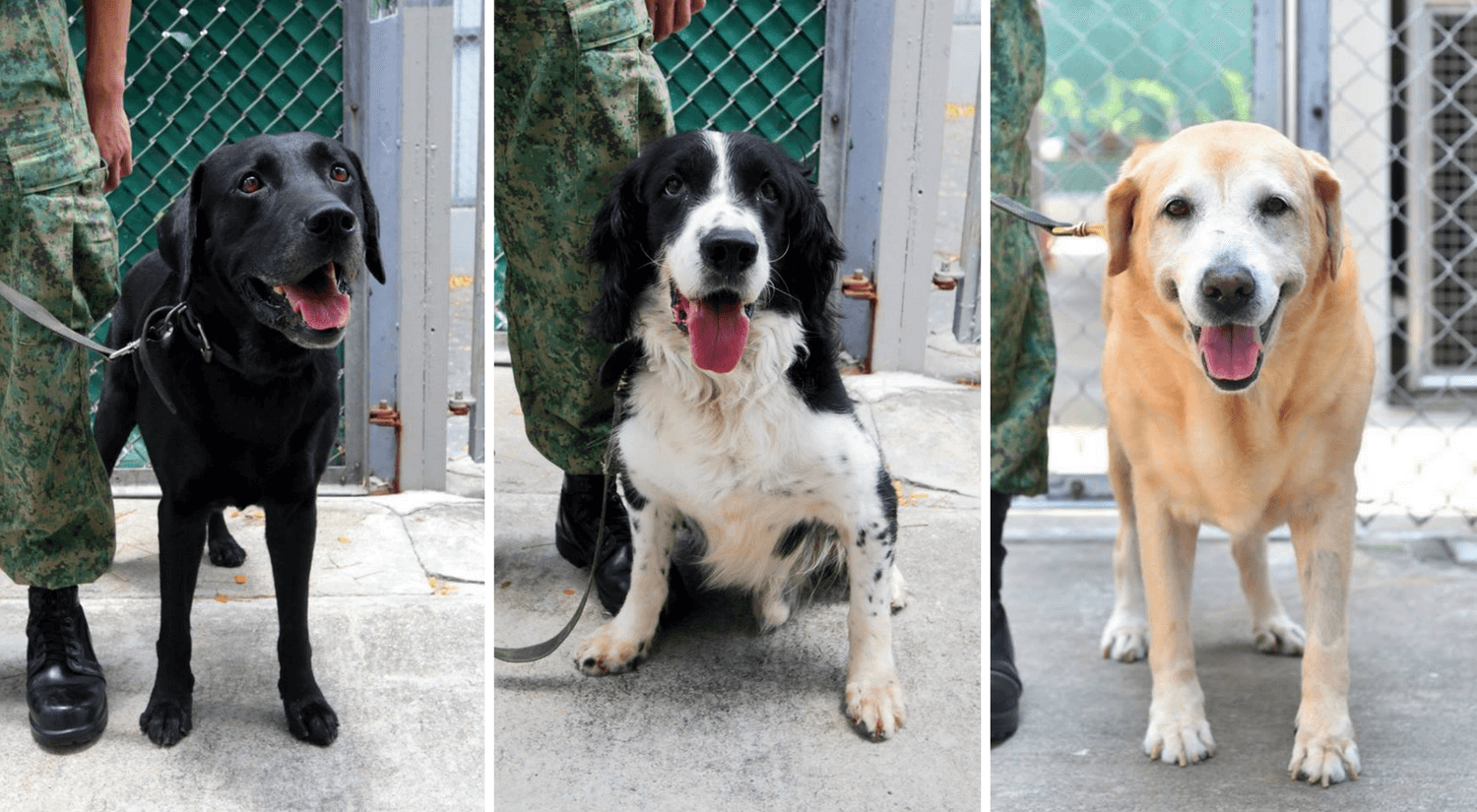 Adopt a retired police or military dog   Vanillapup